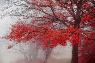 туман, погода, осінь