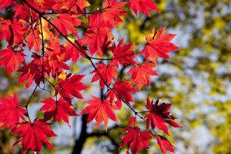 осені